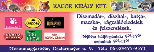 Kacor Király Kft